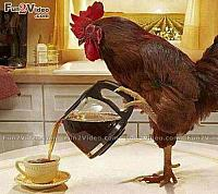 rooster good-morning-funny-coffee